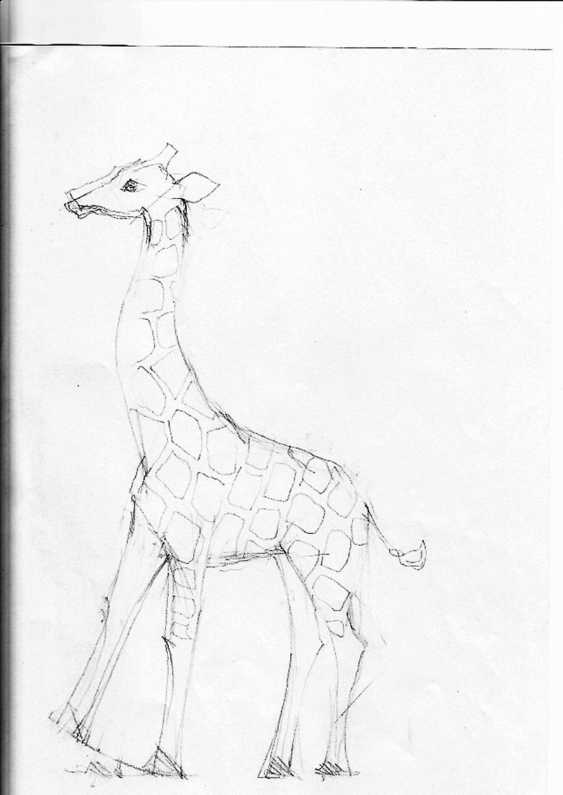 Giraffesketch